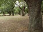 Vista parque SAN MARTIN